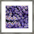 Sweet Dreams Of Purple Daisies Framed Print