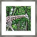 Sweet Giraffe Framed Print