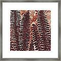 Sword Fern Fossil Framed Print by Katherine Young-Beck