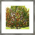 Sycamore Tree Framed Print