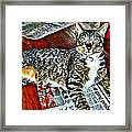 Tabby Cat On Newspaper - Catching Up On The News Framed Print