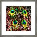 Tale Of A Tail Framed Print