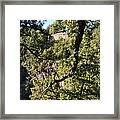 Tallulah Overlook Framed Print