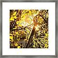 Tangled Flare Framed Print