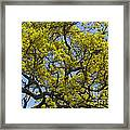 Tangled In Time Framed Print