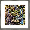 Tangled Tennessee Framed Print