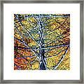 Tangled Web 2 Framed Print