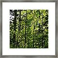 Tannehill Forest Framed Print