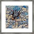 Tarantula Spider In Park Sierra Near Coarsegold-california Framed Print