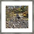 Taylor Creek Lake Tahoe Framed Print