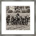 Team Of Eight Framed Print