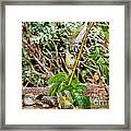 Tennessee Warblers Framed Print