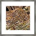 Termites On Log Framed Print by William H. Mullins