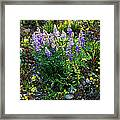 Teton Widflowers  Framed Print
