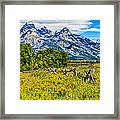 Tetons In The Spring Framed Print