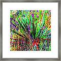Texas Agave Pee Wee Plant Framed Print