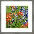 Texas Best Wildflowers Framed Print
