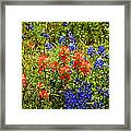Texas Bluebonnets And Red Indian Paintbrush Framed Print