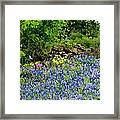 Texas Bluebonnets And Stone Wall Framed Print
