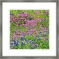 Texas Bluebonnets And Wildflowers Framed Print