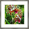 Texas Orchids Framed Print
