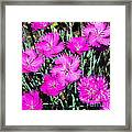 Textured Pink Daisies Framed Print