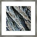 Textured Tree Bark Framed Print