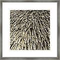 Thatch Framed Print by Peter Cassidy