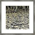 The Beauty Is In The Contrasts  Framed Print