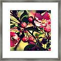 The Bee And The Blossom Framed Print