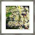 The Bee And The Flowers At Troldhaugen Framed Print