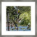 The Bottle Tree Framed Print