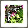 The Brown Clipper Framed Print