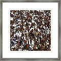 The Cotton Buzz In Alabama Framed Print