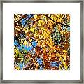 The Dazzling Colors Of Fall Framed Print