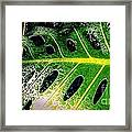 The Dews Framed Print