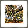 The Dueling Oak Painted Framed Print