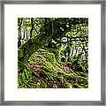 The Elven Forest No2 Wide Framed Print
