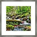 The Emerald Forest 15 Framed Print