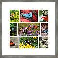 The Glory Of Butterflies 3 Framed Print