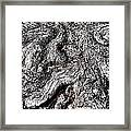The Gnarled Old Tree Framed Print