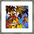 The Golden Hues Of Autumn  Framed Print