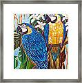 The Golden Macaw Framed Print