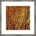 The Golden Tree Framed Print