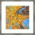 The Gorgeous Fall Framed Print