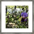 The Iris And St Francis Framed Print