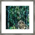 The Leopard Is Hungry Framed Print