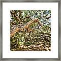 The Life Of Oaks - The Magical Trees Of The Los Osos Oak Reserve Framed Print