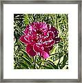 The Lonely Flower Framed Print