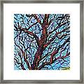 The Looking Tree Framed Print